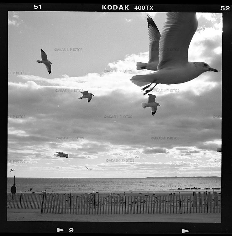 Seagulls in Coney Island.