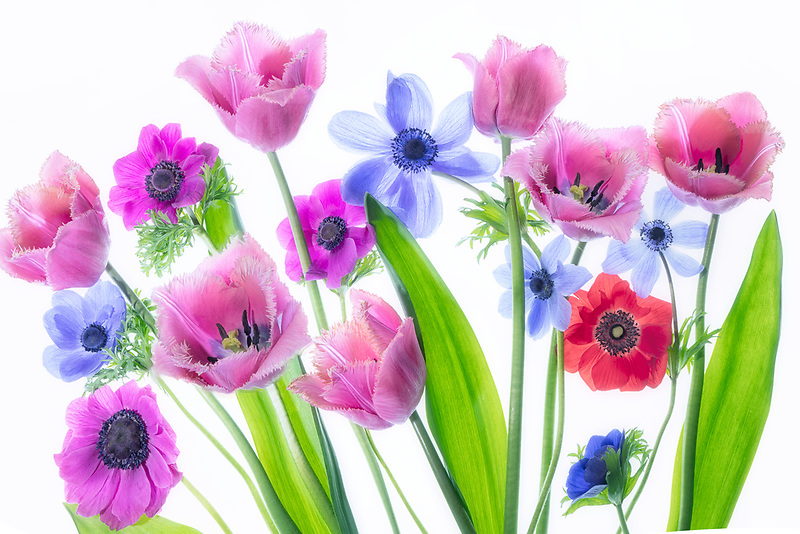 Tulips and anemone bouquet.