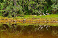 Tlell River. Graham Island. , Haida Gwaii (formerly the Queen Charlotte Islands), British Columbia, Canada