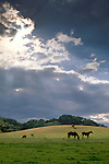 Storm clouds and sunbeam rays in blue sky over horses in green grass spring pasture on ranch in Santa Clara County, California