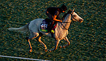 October 31, 2019: Breeders' Cup Mile entrant Lord Glitters, trained by David O'Meara, exercises in preparation for the Breeders' Cup World Championships at Santa Anita Park in Arcadia, California on October 31, 2019. John Voorhees/Eclipse Sportswire/Breeders' Cup/CSM