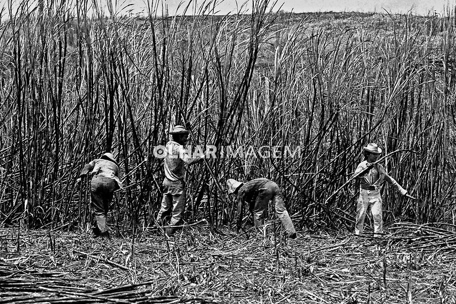 Trabalho de boias-frias em canavial na Zona da Mata. Pernambuco. 1983. Foto de Juca Martins.