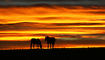 Two horses named Lotto and Bella take in a colorful sunset while grazing on Glennda Frank's property north of Cheyenne Tuesday evening.  Michael Smith/staff