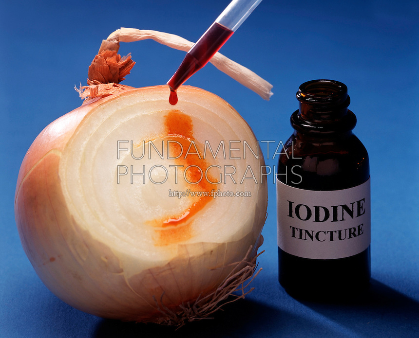 STARCH-IODINE COMPLEX TEST: ONION: 1 of 2<br />