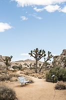 Joshua Tree National Park, California. Syndicated through Gallery Stock: http://www.gallerystock.com.