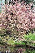 Luiz, FLOWERS, photos, BRLH8675,#f# Blumen, Natur, flores, naturaleza
