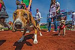 "14 April 2013: Dogs and their owners from the region take part in the pre-game ""Pup Parade"" as a part of the ""Pups in the Park"" celebration at a game between the Atlanta Braves and the Washington Nationals at Nationals Park in Washington, DC. The Braves shut out the Nationals 9-0 to sweep their 3-game series. Mandatory Credit: Ed Wolfstein Photo *** RAW (NEF) Image File Available ***"