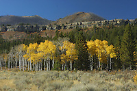 Dramatic fall foliage to match its dramatic topography. Crandall area, Park County, Wyoming.