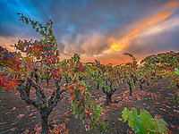 Autumn Glow, Napa Valley