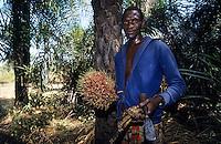 Afrique/Afrique de l'Ouest/Sénégal/Basse-Casamance : Ba Diata ramassant des noix palmistes