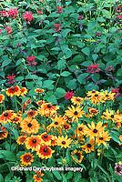 Gloriosa Daisy (Rudbeckia hirta pulcherrima), Red Bee Balm ( Monarda didyma)  Marion Co.   IL