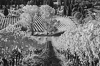 Infra Red Black & White view of vineyards, near Montalcino, Italy, Tuscany