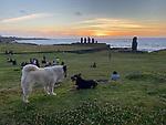 Two Dogs, Moai Sunset, Ahu Tahai