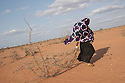 Kenya - Dadaab - A Somali refugee carrying dead wood back home, it will be used to build a fence around their tents and to cook.