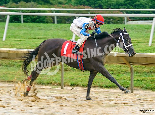 Night Madam winning at Delaware Park on 9/19/16