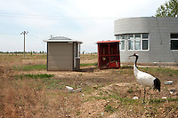 A red-crowned crane stands at the entrance to the Zhalong Wetlands, Heilongjiang Province. China. 2011