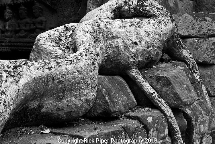 Ta Prohm Roots And Stone 06 - Ta Prohm Temple, Angkor, Cambodia