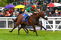 Winner of The First Carlton Novice Auction Stakes Div 2 Grove Perry ridden by David Probert and trained by Andrew Balding during Evening Racing at Salisbury Racecourse on 11th June 2019