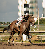 HALLANDALE BEACH, FL - March 31: Audible, #8, seals the deal for his Kentucky Derby bid after his decisive win in the Grade I Xpressbet Florida Derby at Gulfstream Park on March 31, 2018 in Hallandale Beach, FL. (Photo by Carson Dennis/Eclipse Sportswire/Getty Images.)