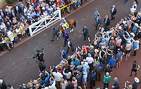 horse racing,