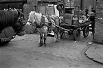Rag and Bone Man, horse and collecting scrap metal and stuff to sell, Ladbroke Grove West London 1970 Totters Yard, several rag and bone men, used same yard where horses were often their horses were stabled.