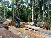 Operação Labareda.<br /> Fiscais do Ibama  fazem apreensão de madeira retirada ilegalmente no oeste do estado<br /> Novo Progresso, Pará, Brasil<br /> agosto/2012 <br /> Foto: Nelson Feitosa/Ibama
