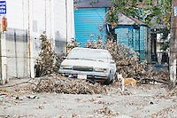 Stray dogs, sometimes in packs, are common in the city of New Orleans on September 17, 2005.