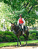 outrider before The Buzz Brauninger Arabian Distaff (grade 1) at Delaware Park on 9/2/16
