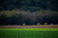 Pocos de Caldas_MG, Brasil...Plano de manejo das Reserva Particular do Patrimonio Natural (RPPN) em Pocos de Caldas, Minas Gerais. Na foto, detalhe de uma planta...The Private Natural Heritage Reserve (RPPN) in Pocos de Caldas, Minas Gerais. In this photo, a plant detail...Foto: JOAO MARCOS ROSA /  NITRO