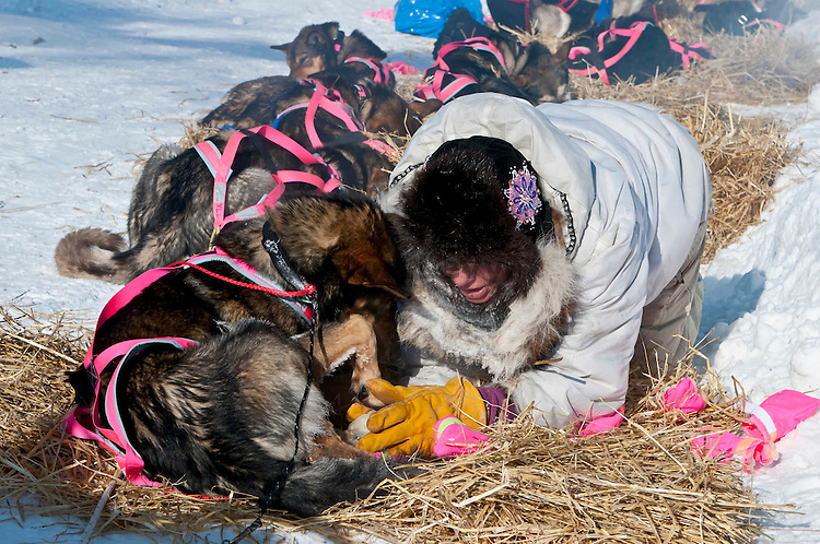 Dee Dee Jonrowe removing booties from her sled dogs at Unalakleet checkpoint, Iditarod 2012, Alaska