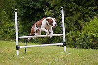 B & B dog training