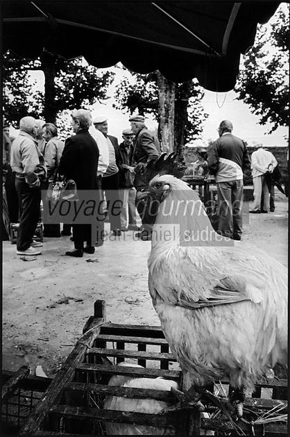 Europe/France/Bourgogne/71/Saône-et-Loire/ Louhans: Poulets de Bresse AOC sur le marché