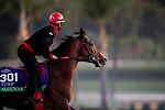 OCT 29: Breeders' Cup Turf entrant Alounak, trained by Waldemar Hickst,  gallops at Santa Anita Park in Arcadia, California on Oct 29, 2019. Evers/Eclipse Sportswire/Breeders' Cup