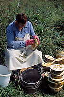 Austria, Styria, woman collecting pumpin seeds
