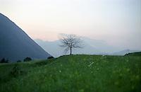 Val Borlezza (Valle Seriana, Prealpi Bergamasche). Un albero isolato --- Val Borlezza (Valle Seriana, Bergamo Prealps). An isolated tree
