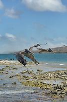 Aruba Aruba