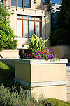 sunny late afternoon detail close up image of colorful pink and purple summer annuals spilling out of an interesting raised planter box built in to a stucco wall that terraces down the back yard of a European-style estate house with blue summer sky above