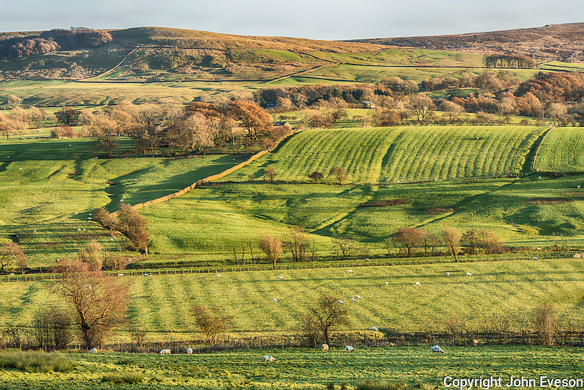 Farm grassland, Newton, Clitheroe, Lancashire.
