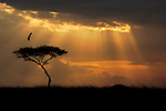 Morning beams of light come threw the clouds lighting up the African sky.