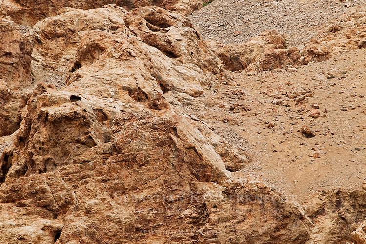 Siberian Ibex (Capra sibirica) boars on mountainside, Pikertyk, Tien Shan Mountains, eastern Kyrgyzstan