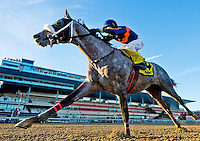 NEW YORK, NY - FEB 04: El Areeb #4, ridden by Trevor McCarthy, wins the Withers Stakes on Withers Stakes Day at Aqueduct Racetrack on February 4, 2017 in the Ozone Park neighborhood of New York, New York. (Photo by Scott Serio/Eclipse Sportswire/Getty Images)