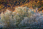 Autumn frost against the Berkshire Hills, MA, USA