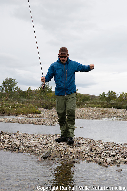 Mann kjører smålaks i liten elv langt inne på vidda. ---- Man fighting smal salmon.