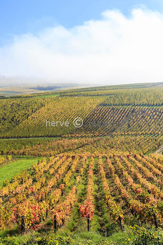France, Cher (18), région du Berry, Sancerre, le vignoble en automne et brumes matinales // France, Cher, Sancerre, the vineyard in autumn, morning mists