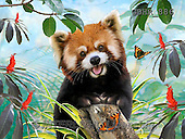 Howard, REALISTIC ANIMALS, REALISTISCHE TIERE, ANIMALES REALISTICOS, paintings,+red panda,++++,GBHR886,#A# ,puzzles
