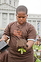 "Volunteer Rosevelt Curry unpots lettuce at Community Planting Day (July 12, 2008) of the Slow Food Nation Victory Garden at San Francisco's Civic Center. The garden project ""demonstrates the potential of a truly local agriculture practice that unites and promotes Bay Area urban gardening organizations, while producing high quality food for those in need.""* The garden is planted on the same site as the post-World War II garden sixty years ago. The food will be grown over a period of two months, harvested, and donated to people in need..*slowfoodnation.org"
