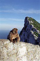 Mother and child Barbary Apes seen from the lookout point on the climb up the rock of Gibraltar