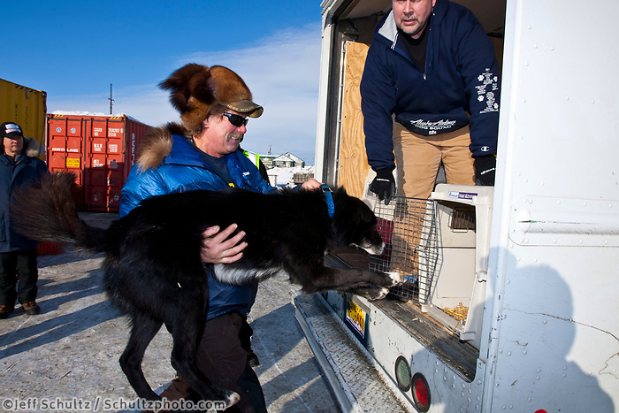 Sonny Lindner gets help from Dave Nielson of the Alaska Airlines dog squad as they load his dogs into kennels and a van for transport to the Nome airport during the 2010 Iditarod