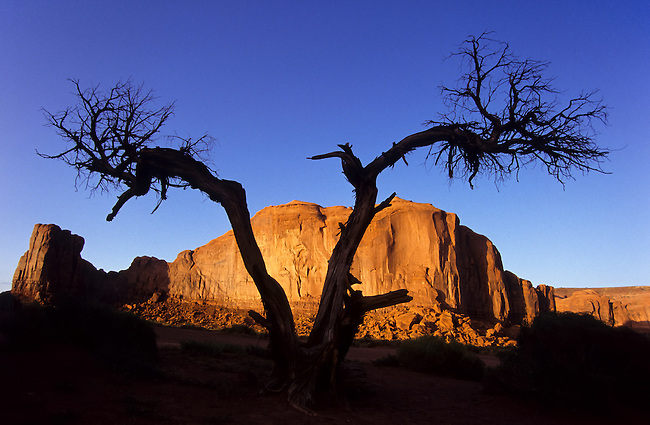 Scenic image of a dead tree in the navaho Indian reservation, Monument Valley National Park, Utah, USA