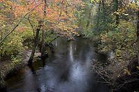 Pine Barrens Creek; autumn; NJ: Pinelands National Reserve